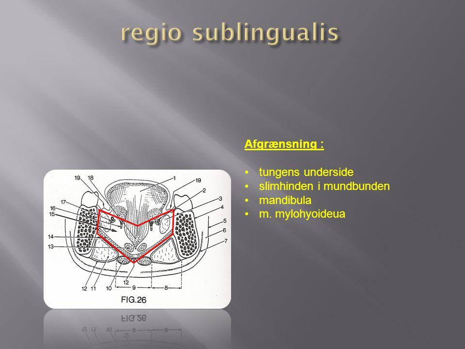 regio sublingualis Afgrænsning : tungens underside