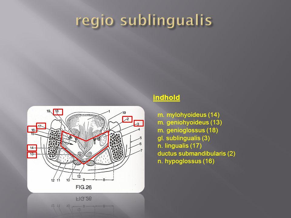 regio sublingualis indhold m. mylohyoideus (14) m. geniohyoideus (13)