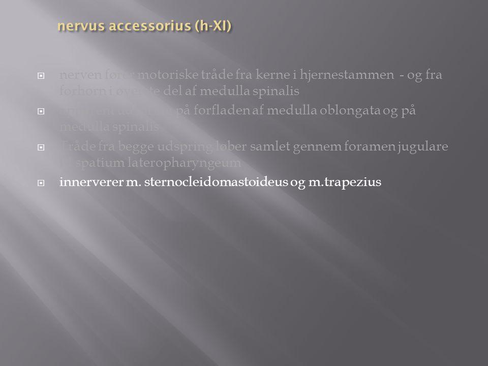 nervus accessorius (h-XI)