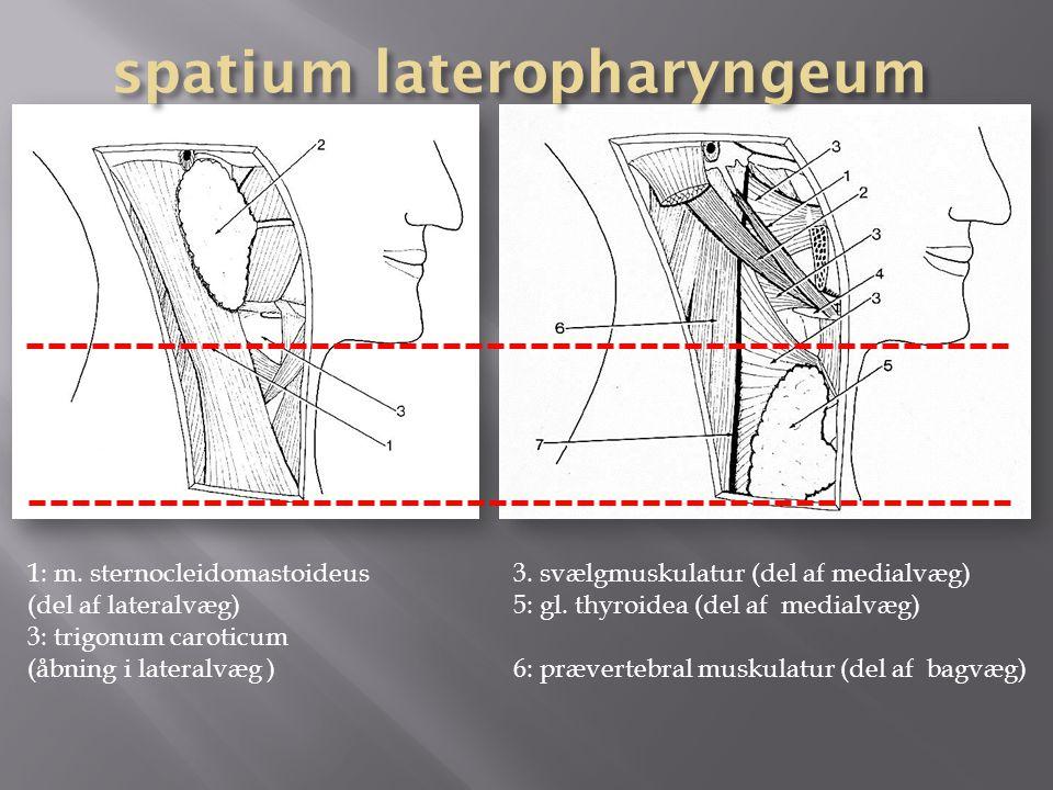 spatium lateropharyngeum