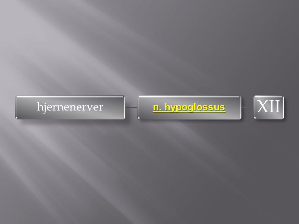 hjernenerver n. hypoglossus XII