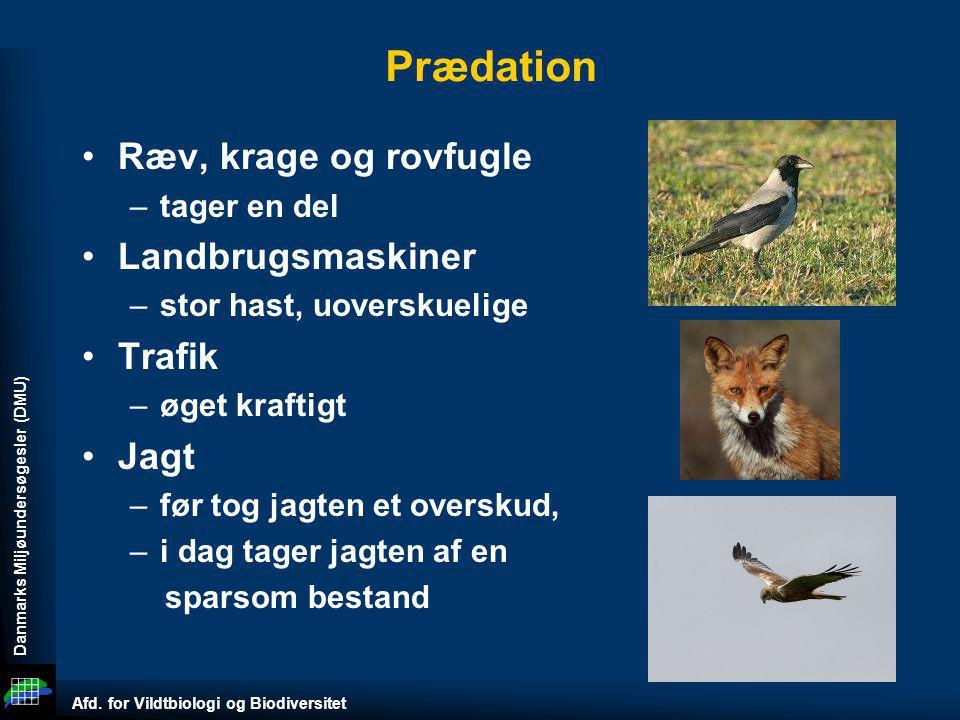 Prædation Ræv, krage og rovfugle Landbrugsmaskiner Trafik Jagt