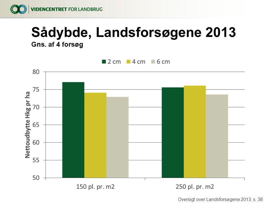 Sådybde, Landsforsøgene 2013 Gns. af 4 forsøg