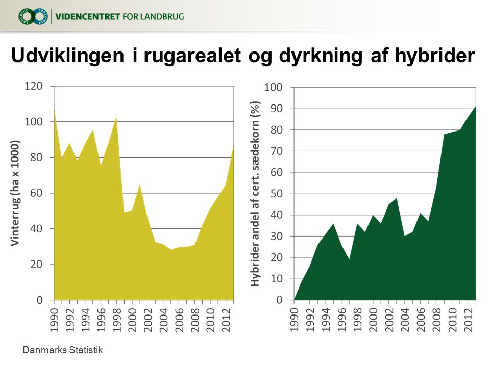 Udviklingen i rugarealet og dyrkning af hybrider