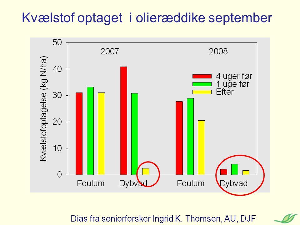 Kvælstof optaget i olieræddike september