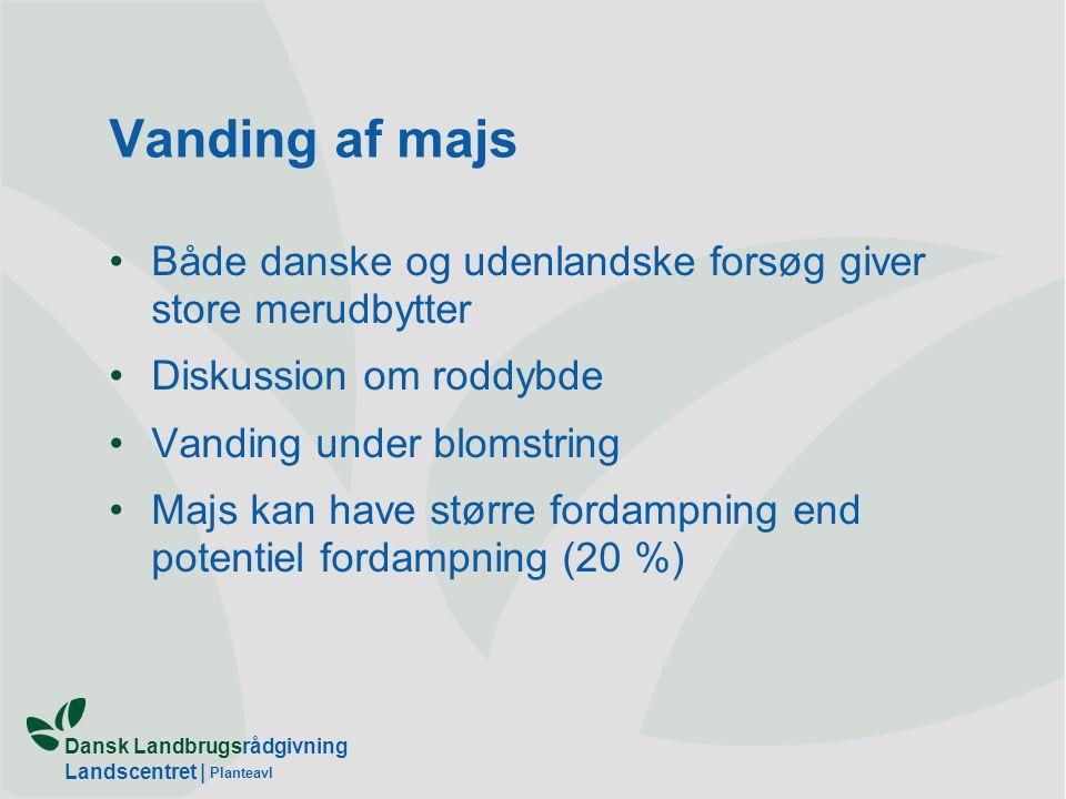 Vanding af majs Både danske og udenlandske forsøg giver store merudbytter. Diskussion om roddybde.
