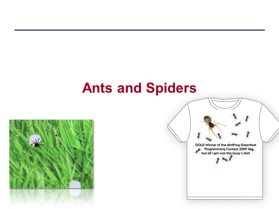 Ants and Spiders