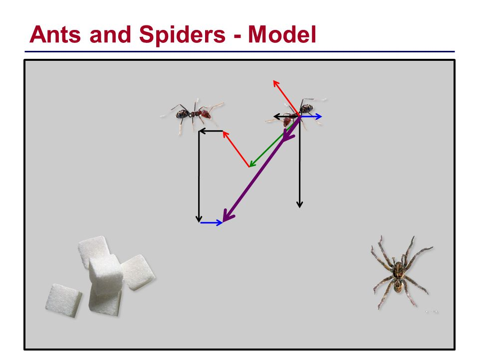 Ants and Spiders - Model