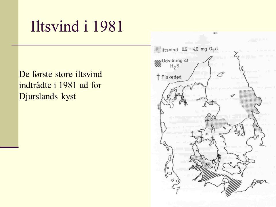 Iltsvind i 1981 De første store iltsvind indtrådte i 1981 ud for Djurslands kyst