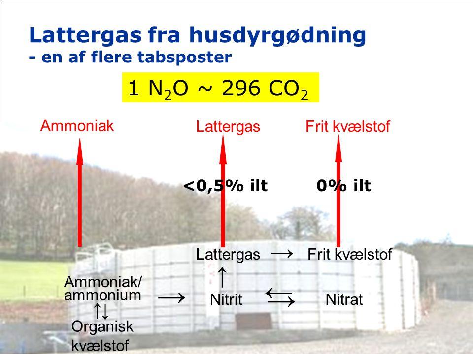 Lattergas fra husdyrgødning - en af flere tabsposter