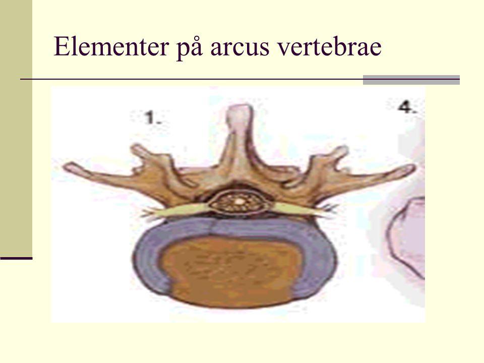 Elementer på arcus vertebrae