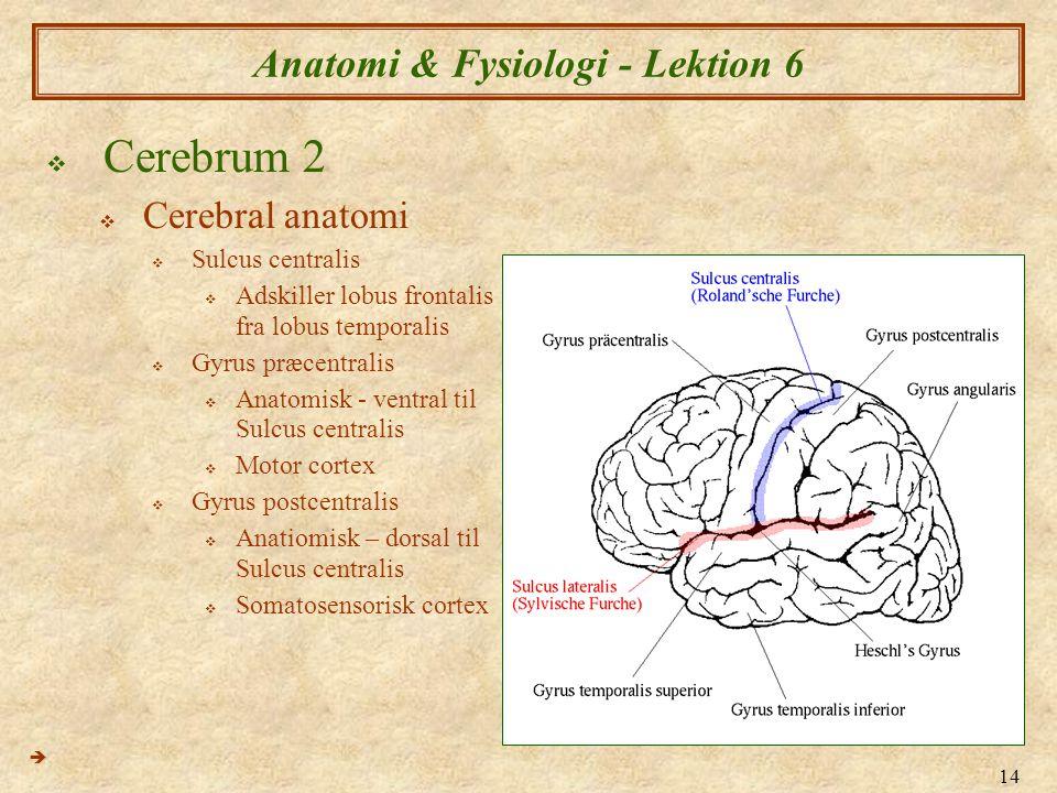 Anatomi & Fysiologi - Lektion 6