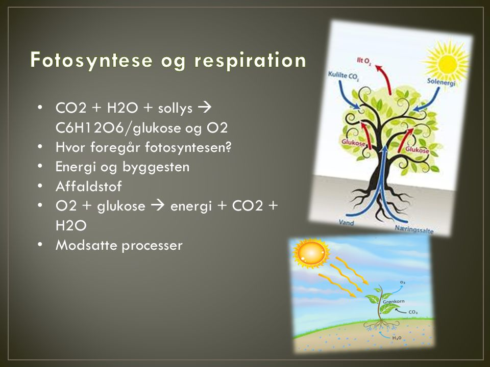 Fotosyntese og respiration