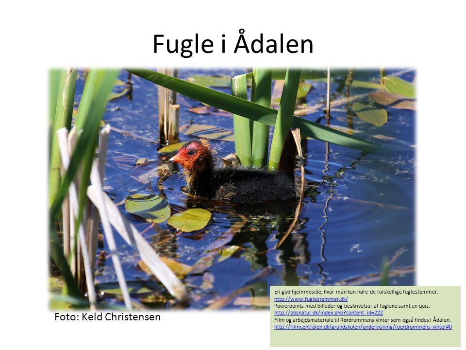 Fugle i Ådalen Foto: Keld Christensen