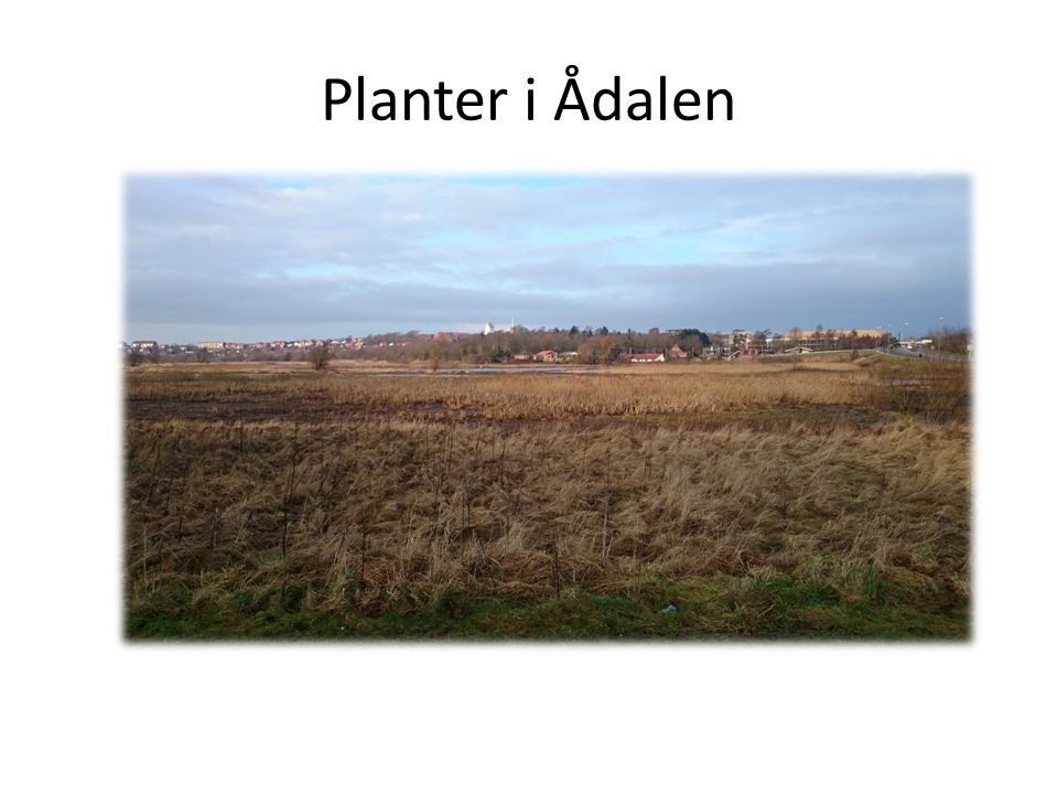 Planter i Ådalen