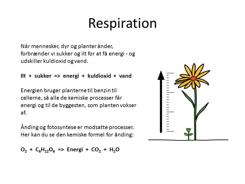 Respiration Når mennesker, dyr og planter ånder, forbrænder vi sukker og ilt for at få energi - og udskiller kuldioxid og vand.