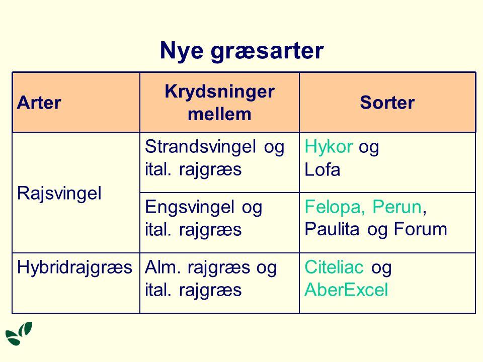 Nye græsarter Alm. rajgræs og ital. rajgræs Hybridrajgræs