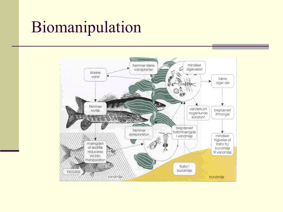 Biomanipulation