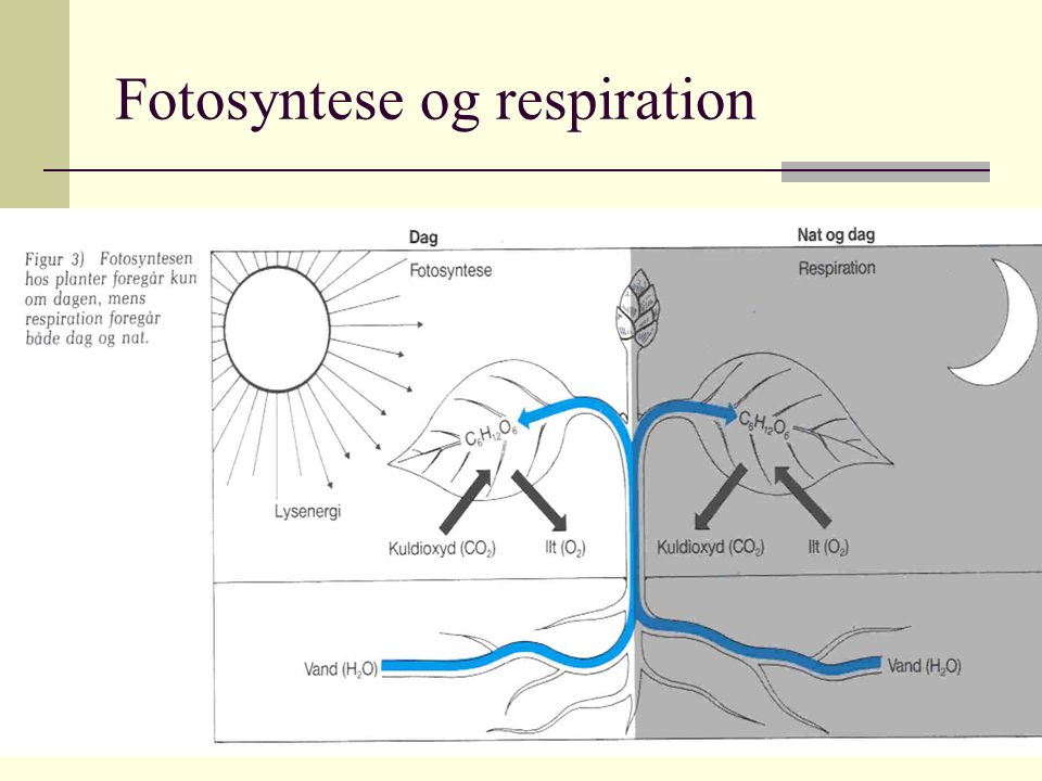Fotosyntese og respiration