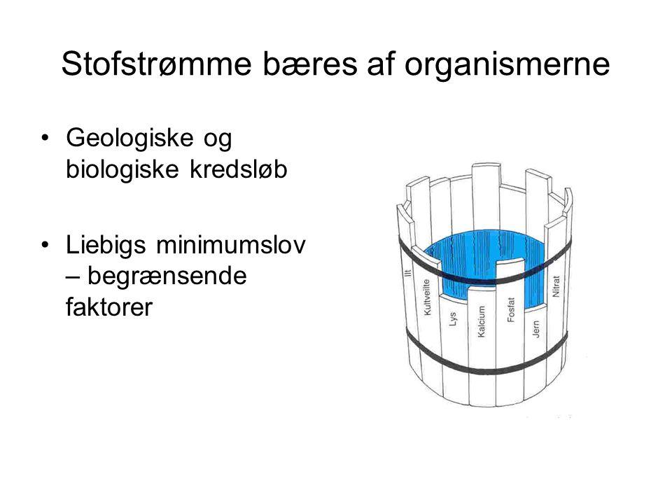 Stofstrømme bæres af organismerne