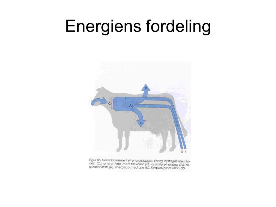 Energiens fordeling