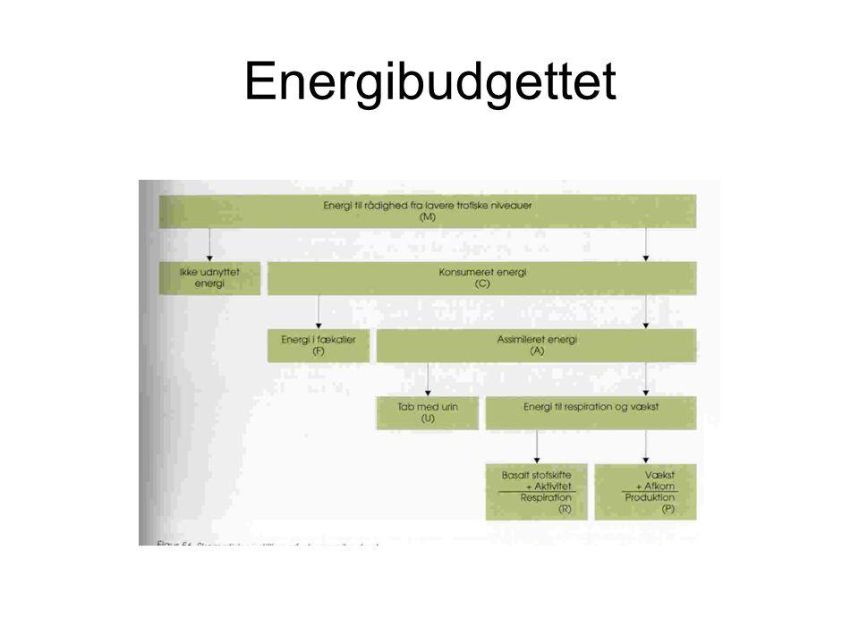Energibudgettet