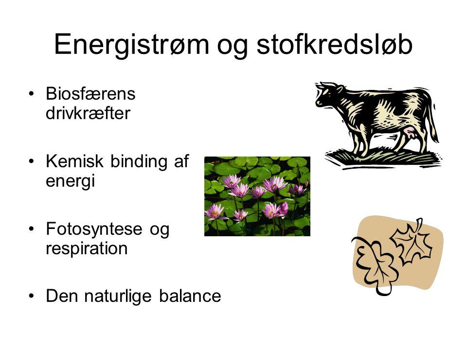 Energistrøm og stofkredsløb