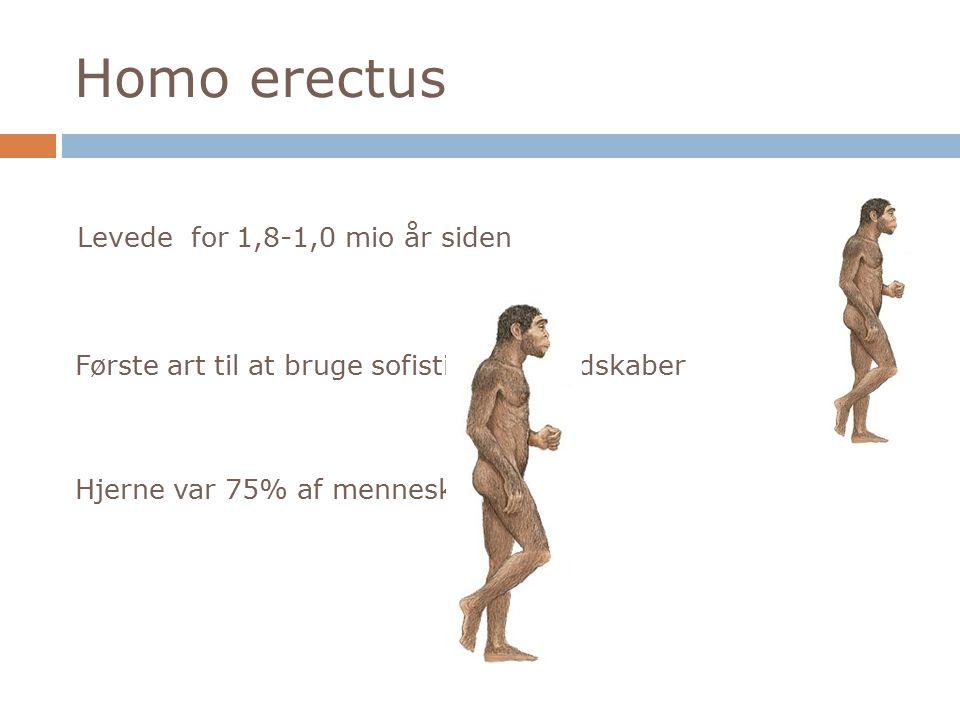 Homo erectus Levede for 1,8-1,0 mio år siden