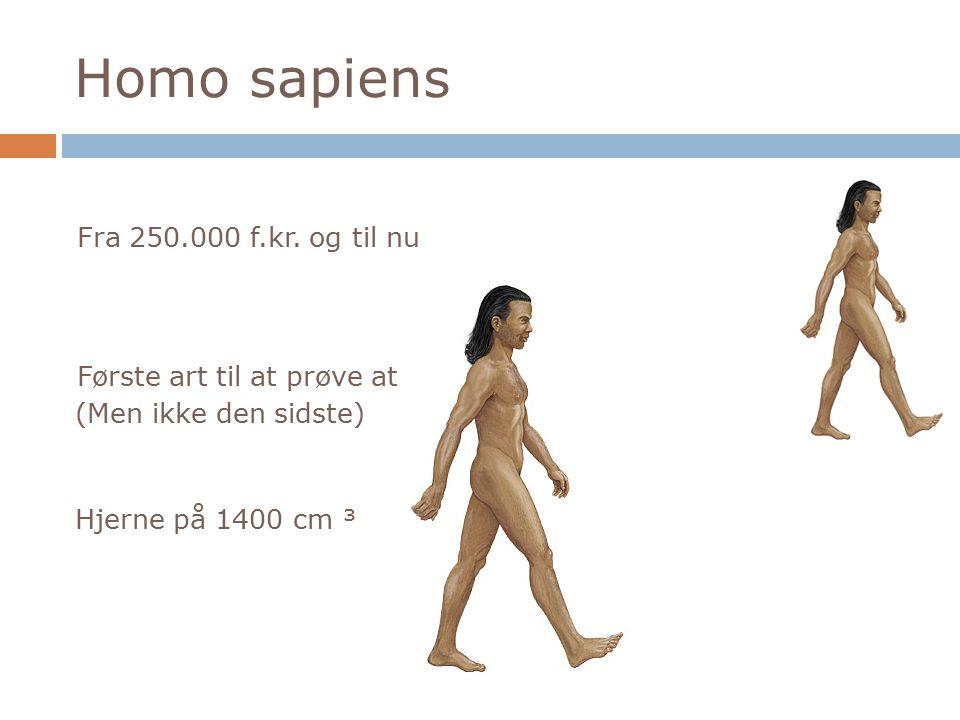 Homo sapiens Fra 250.000 f.kr. og til nu