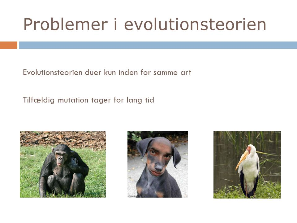 Problemer i evolutionsteorien