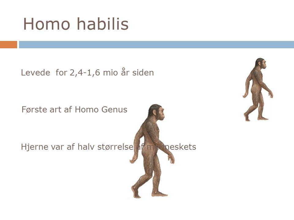 Homo habilis Levede for 2,4-1,6 mio år siden Første art af Homo Genus