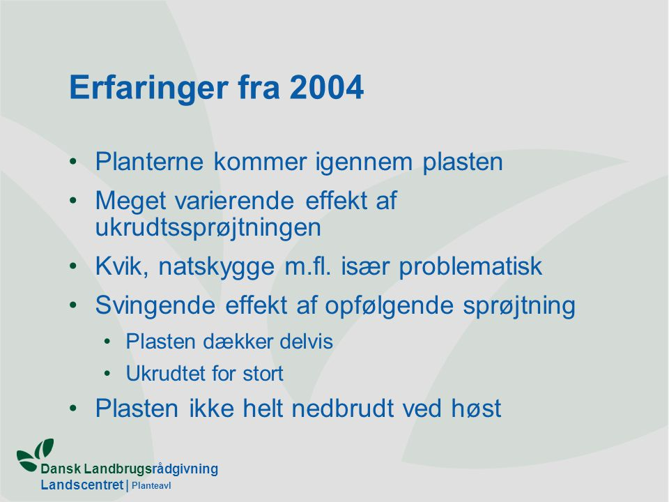 Erfaringer fra 2004 Planterne kommer igennem plasten