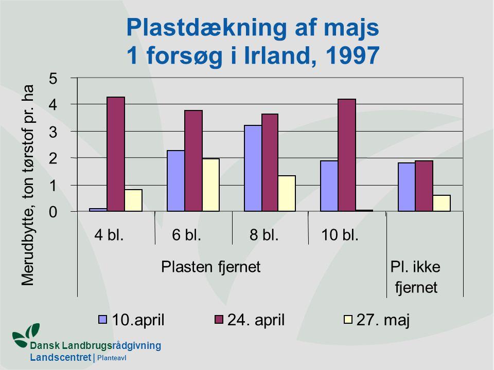 Plastdækning af majs 1 forsøg i Irland, 1997