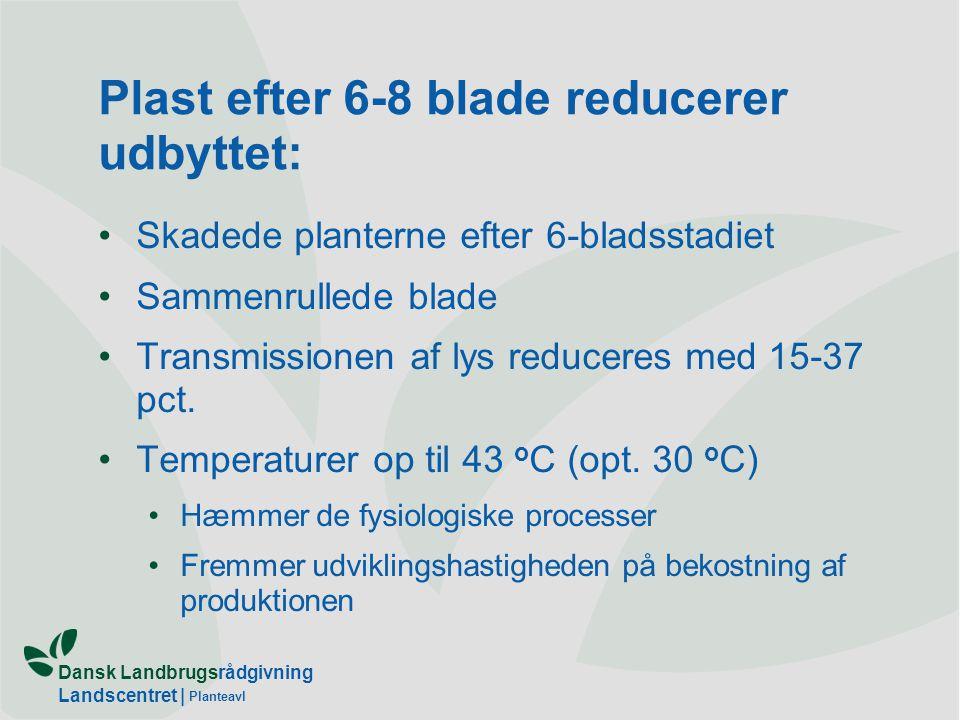Plast efter 6-8 blade reducerer udbyttet: