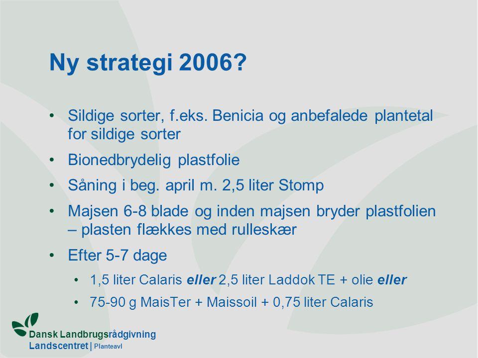Ny strategi 2006 Sildige sorter, f.eks. Benicia og anbefalede plantetal for sildige sorter. Bionedbrydelig plastfolie.