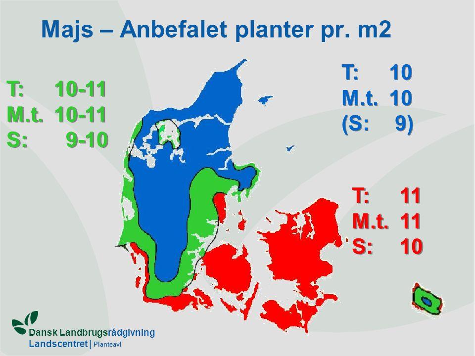 Majs – Anbefalet planter pr. m2