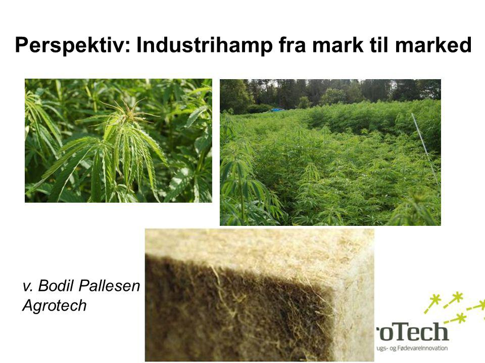 Perspektiv: Industrihamp fra mark til marked