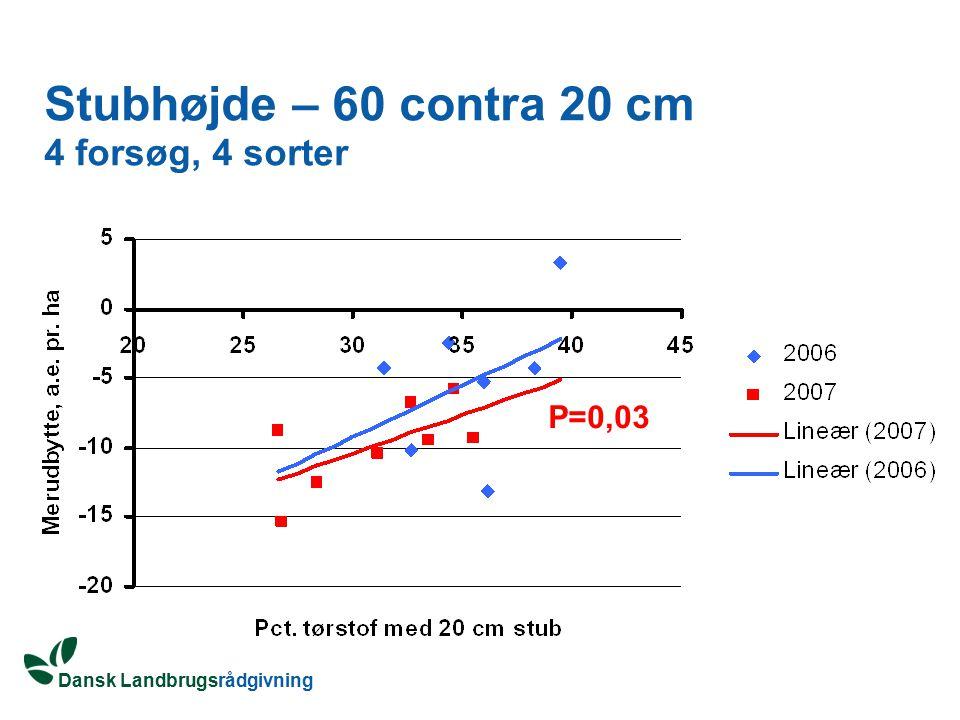 Stubhøjde – 60 contra 20 cm 4 forsøg, 4 sorter