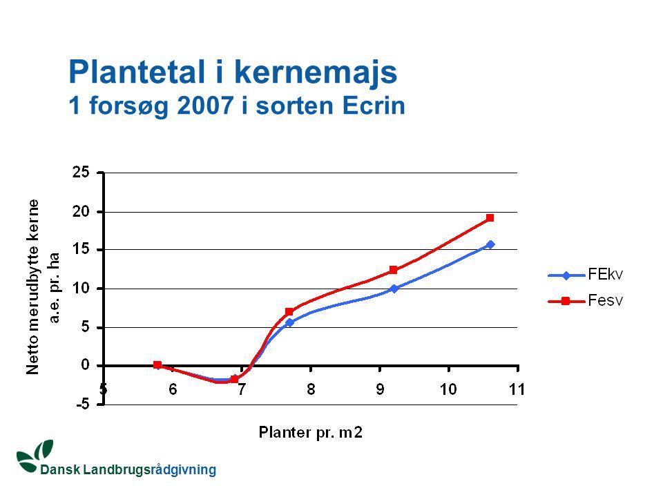 Plantetal i kernemajs 1 forsøg 2007 i sorten Ecrin