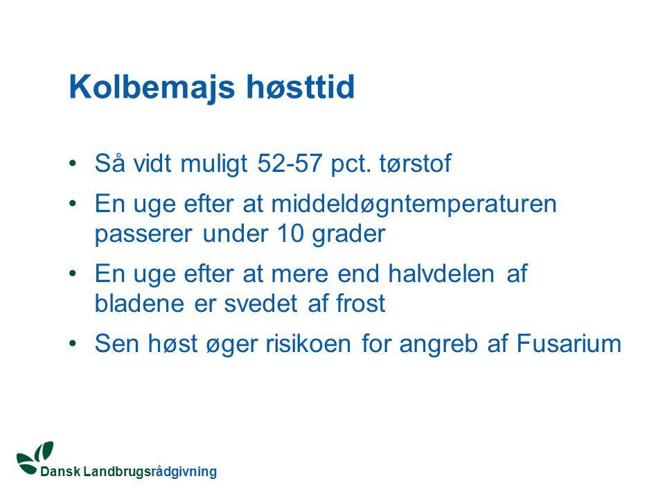 Kolbemajs høsttid Så vidt muligt 52-57 pct. tørstof