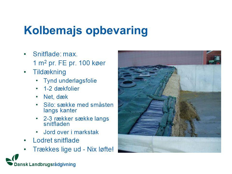 Kolbemajs opbevaring Snitflade: max. 1 m2 pr. FE pr. 100 køer