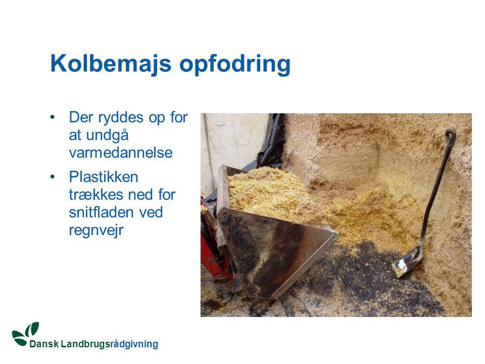 Kolbemajs opfodring Der ryddes op for at undgå varmedannelse