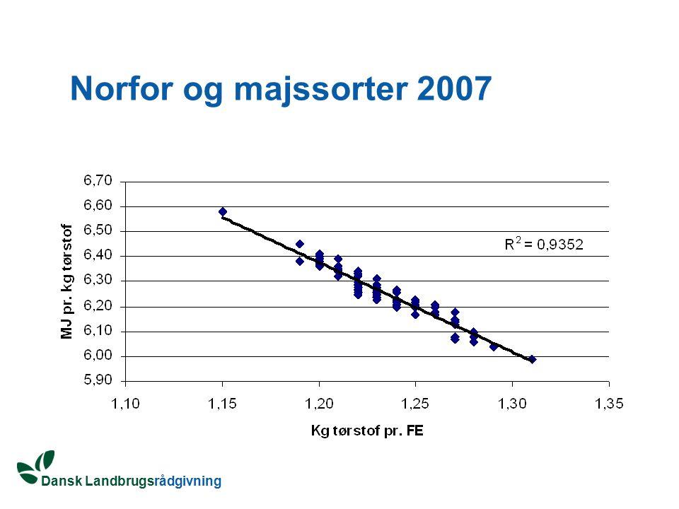 Norfor og majssorter 2007
