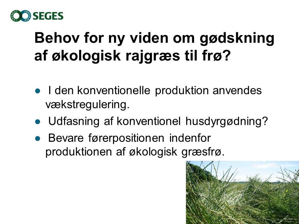 Behov for ny viden om gødskning af økologisk rajgræs til frø