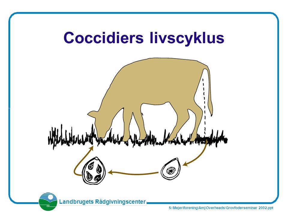 Coccidiers livscyklus