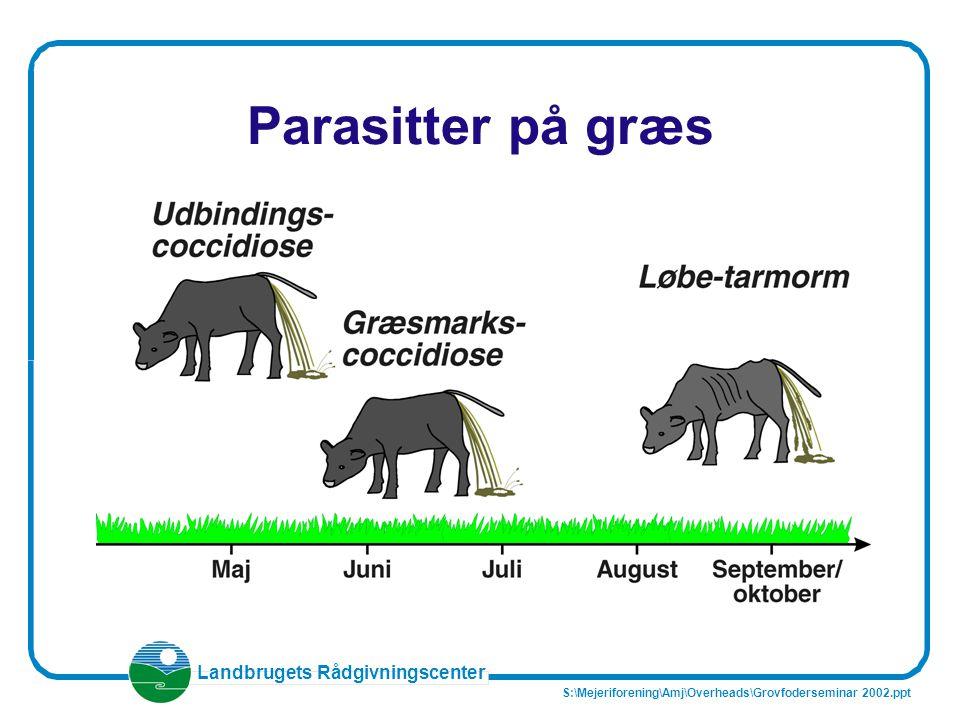 Parasitter på græs S:\Mejeriforening\Amj\Overheads\Grovfoderseminar 2002.ppt