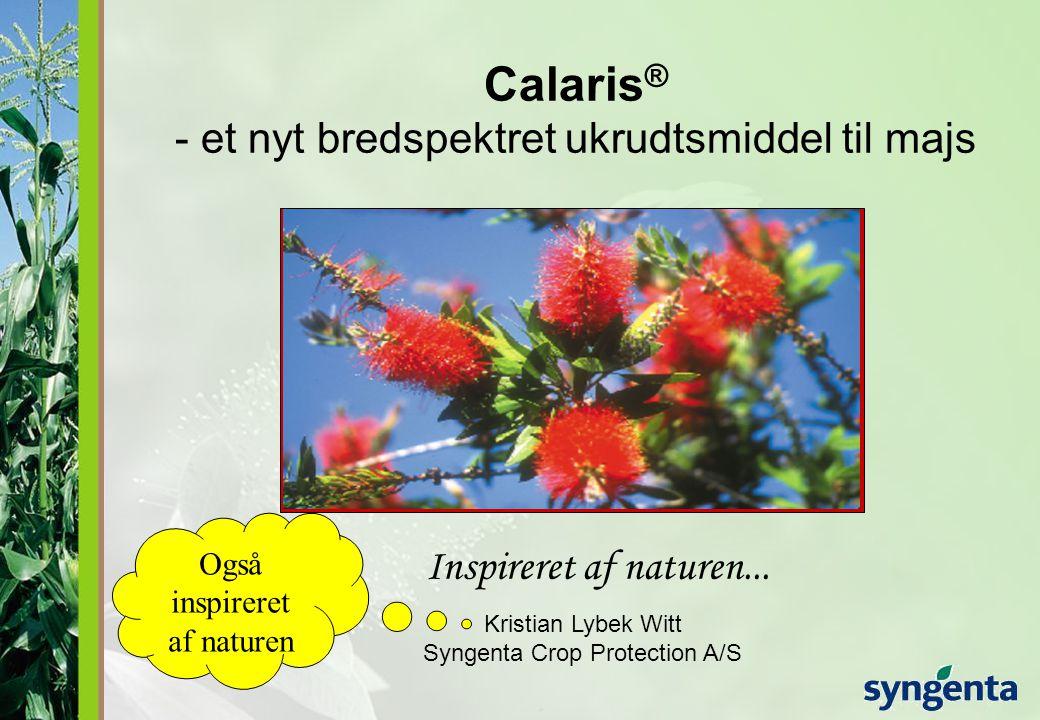 Calaris® - et nyt bredspektret ukrudtsmiddel til majs