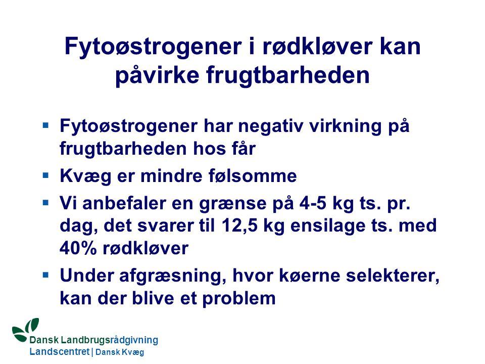 Fytoøstrogener i rødkløver kan påvirke frugtbarheden