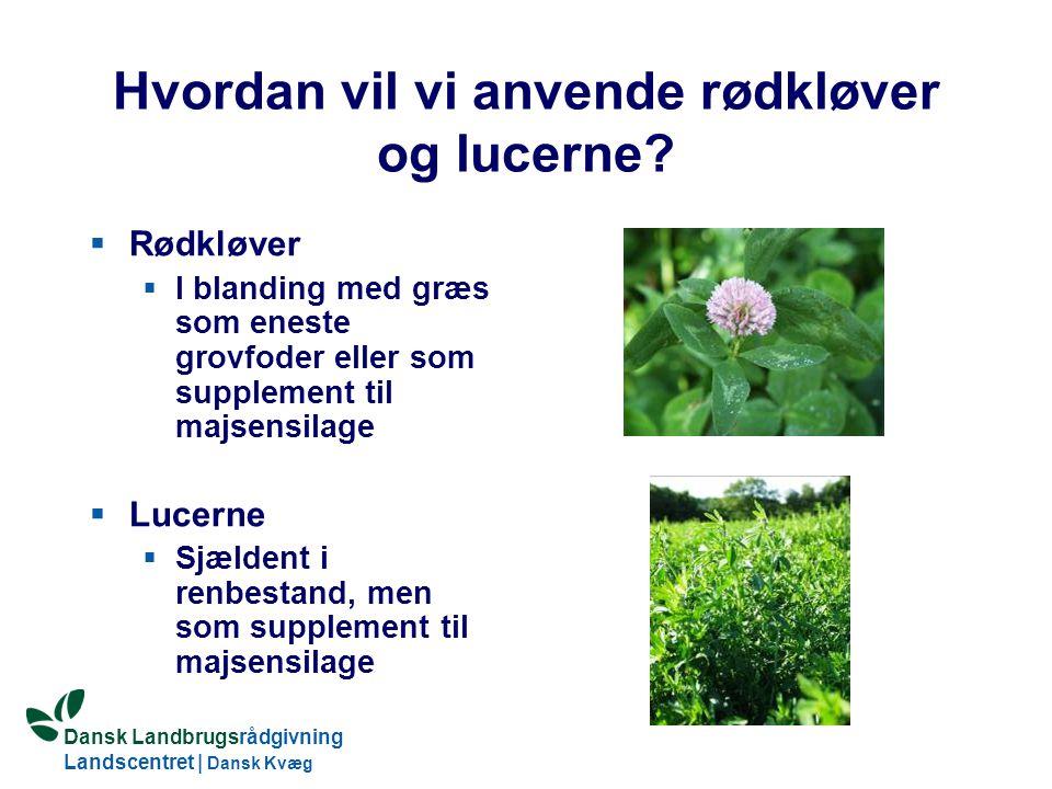 Hvordan vil vi anvende rødkløver og lucerne