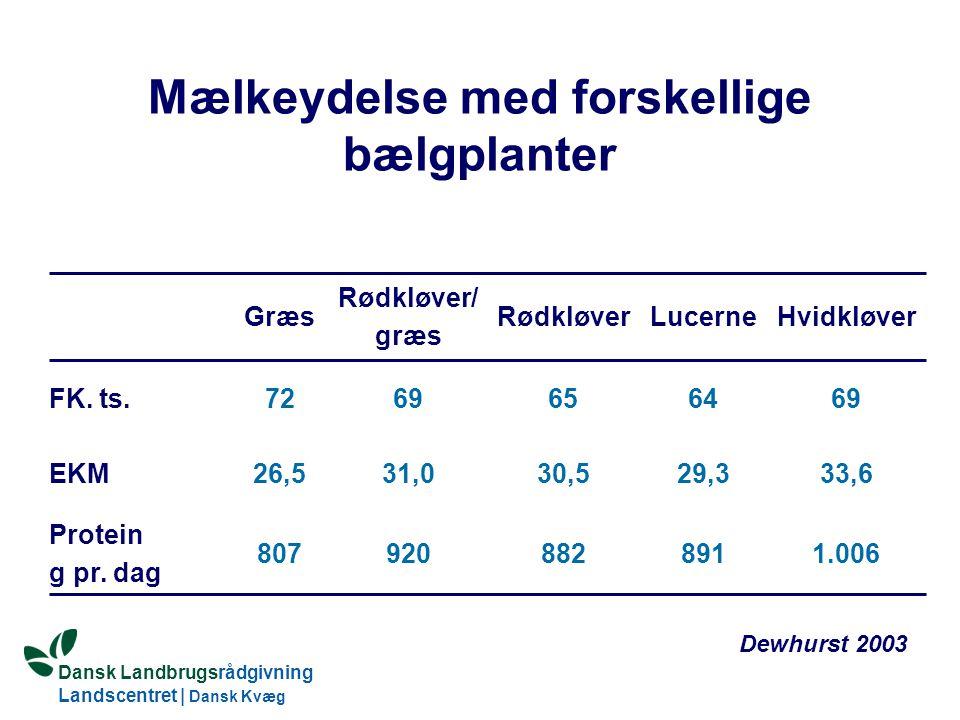 Mælkeydelse med forskellige bælgplanter